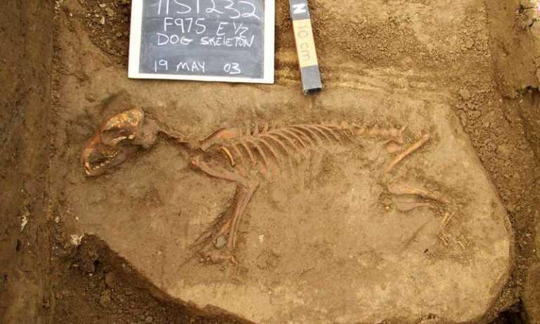 древние-собаки